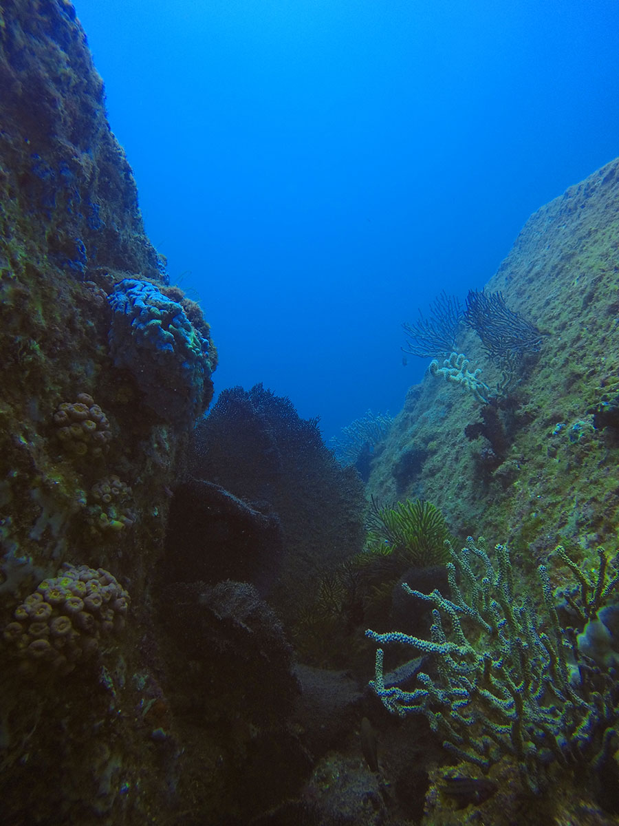 coral crevice