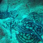 group of rays