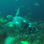 turtle loreto