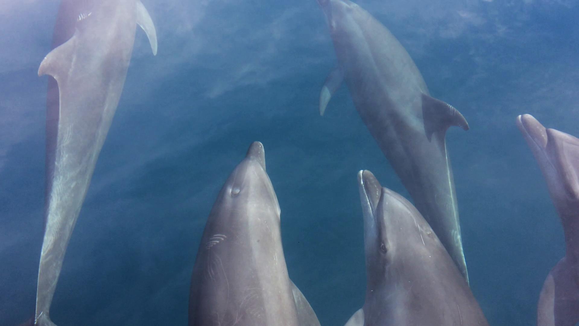 dolphins loreto
