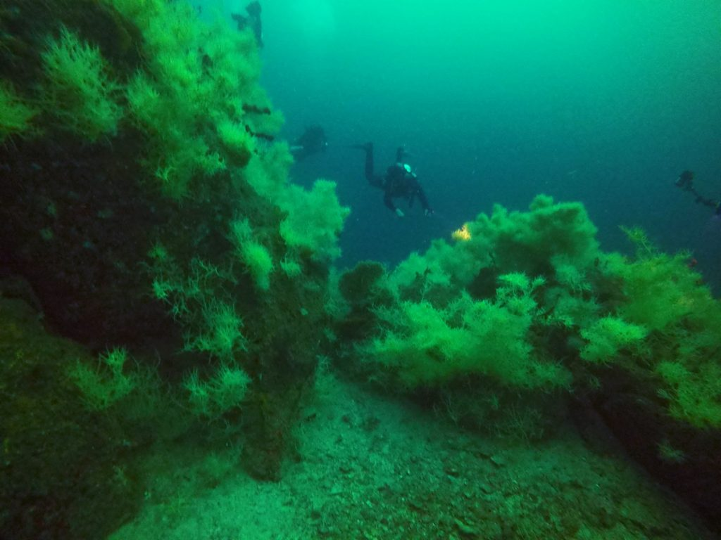 coral negro loreto