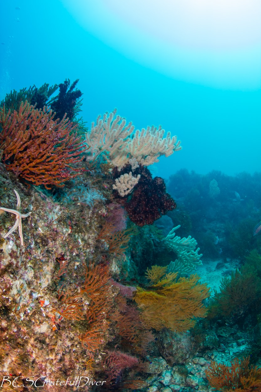 Corals Loreto