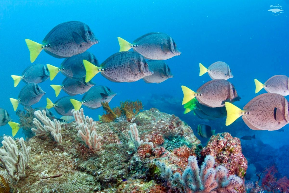 reef and fish